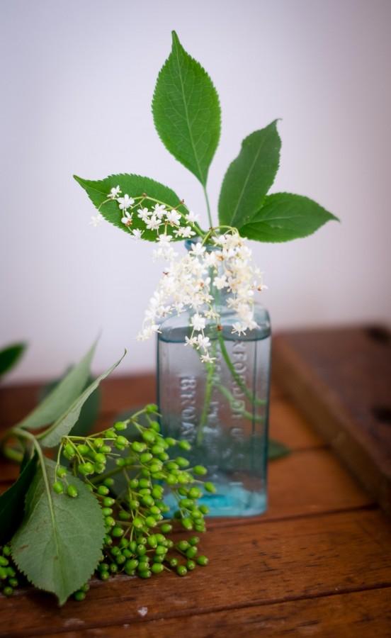 Elderflowers   Patisserie Makes Perfect